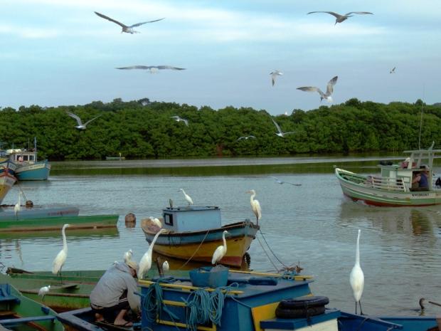 Barcos e Garças