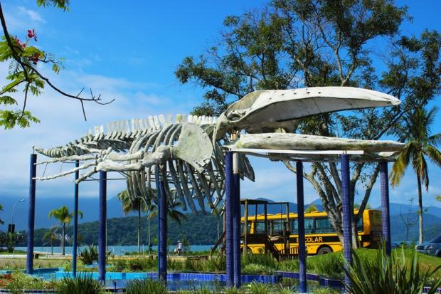 Olha o tamanho de esqueleto e imagina que a baleia deveria ter o dobro do tamanho.