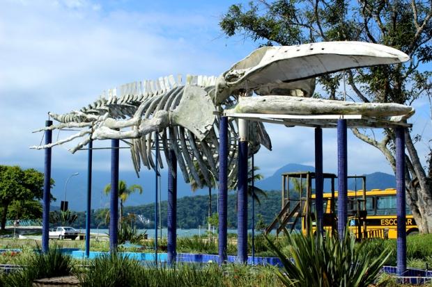Vinte Mil Léguas Submarinas - Tartarugas, lulas gigantes, baleias, tubarões...