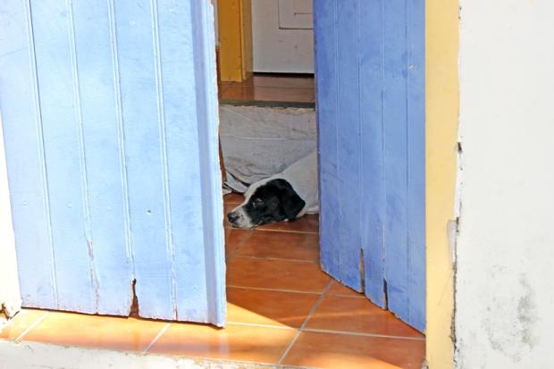 Santana-de-Parnaiba-cachorro-bussola-quebrada