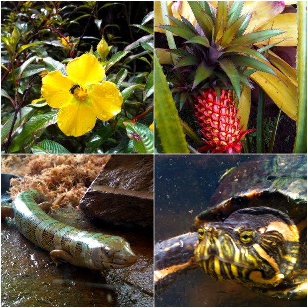 betari fauna flora