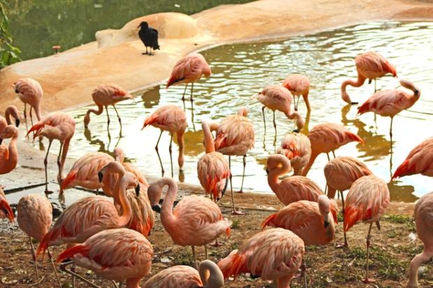 flamingos zoologico