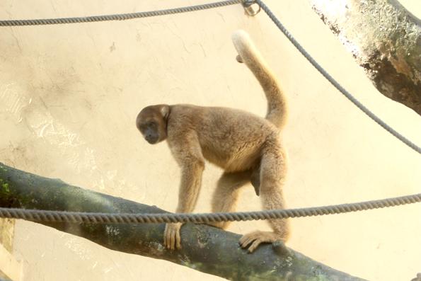 macaco-zoologico