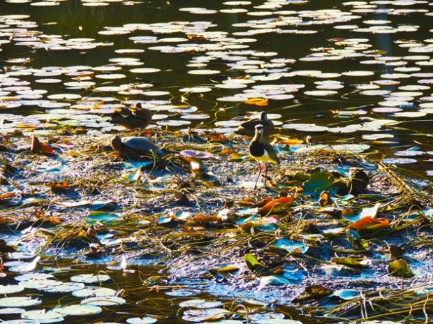 mangue-lago-jardim-botanico