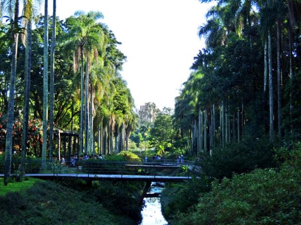 palmeiras-imperiais