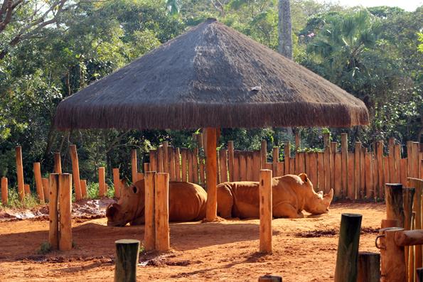 rinoceronte-zoologico