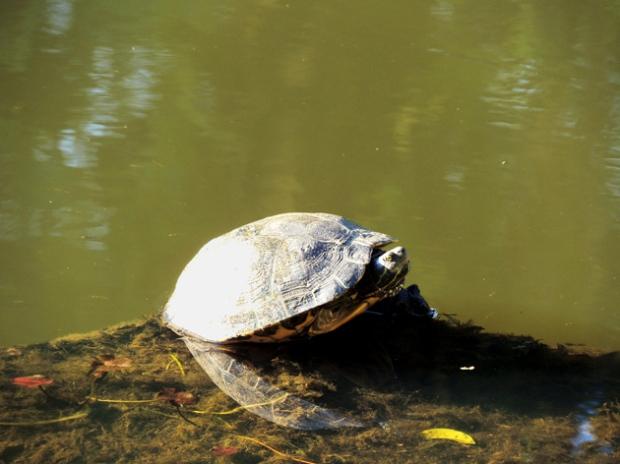 tartaruga-jardim-botanico