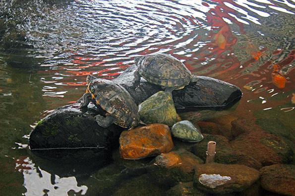 garuva-rodoviaria-tartarugas