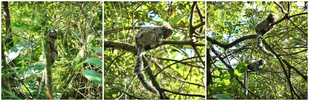 micos-pico-jaragua