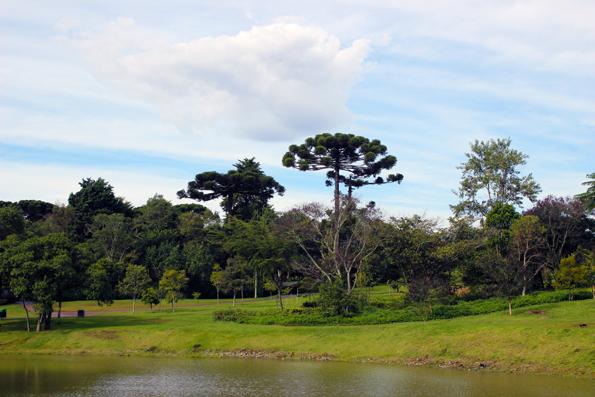 araucaria-lago-Jardim-Botanico-Curitiba