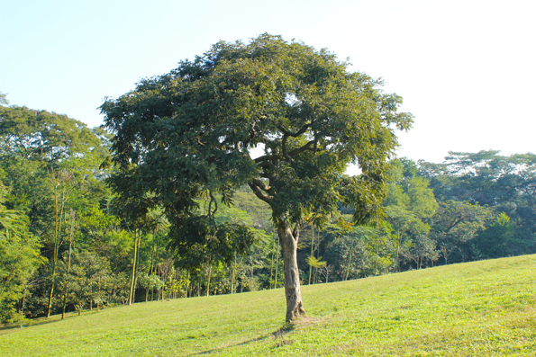mata-bosque-parque-do-carmo