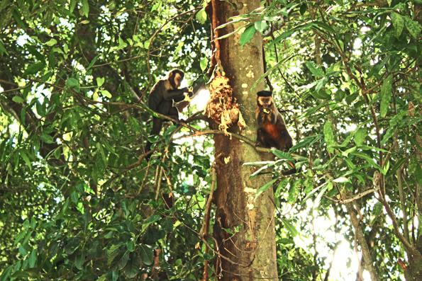 micos-jaca-parque-lage