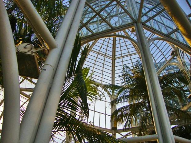 palmeira-estufa