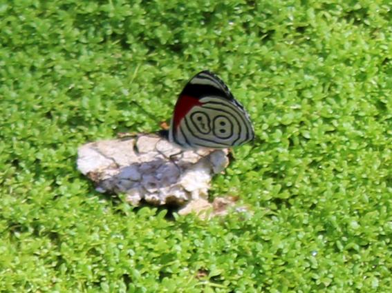 borboleta-88-caverna-jeremias