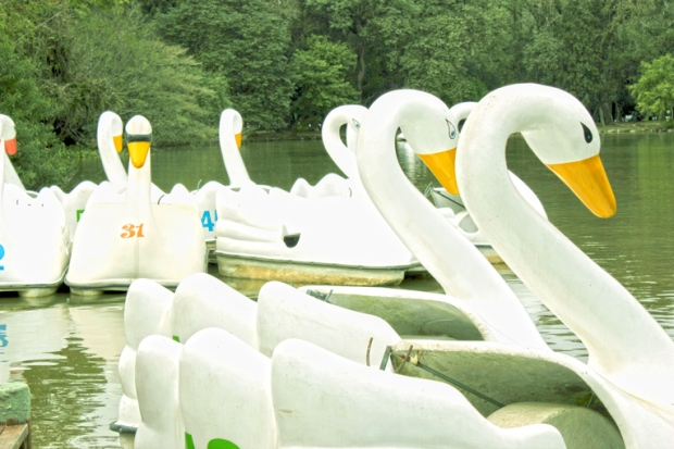 Cisnes pedalinhos Parque Redencao Porto Alegre Bussola Quebrada