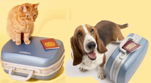 cachorro-e-gato-com-passaporte