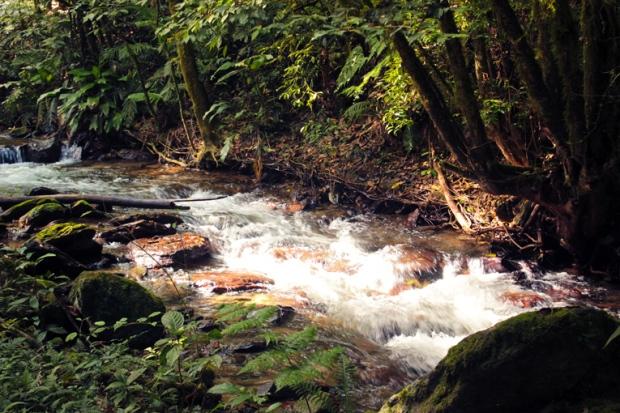 caminho-riacho-rio-floresta
