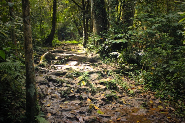 caminhos-sombrios-mata-floresta