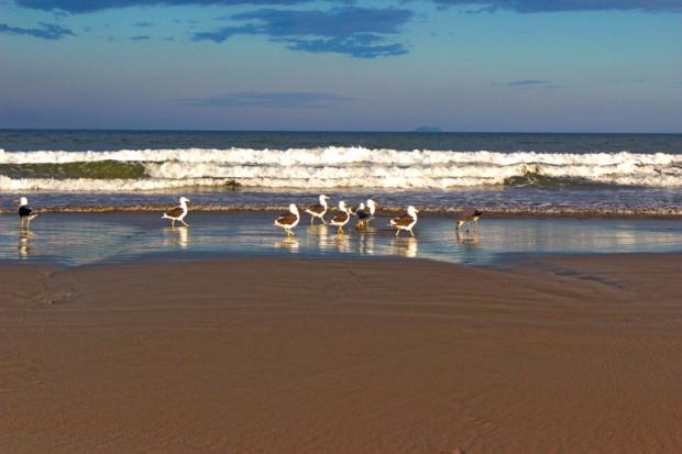 gaivotas-praia-itanhaem-a-bussola-quebrada