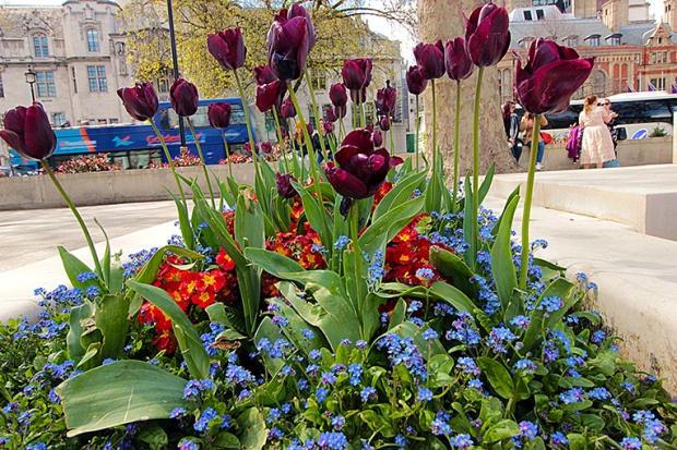 garden-flores-londres-flower-london-a-bussola-quebrada