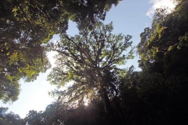 sobrevivencia-selva-a-bussola-quebrada