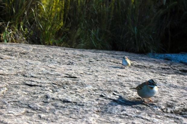 andry-birds-itatiaia-agulhas-negras-a-bussola-quebrada