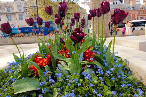 flor-flores-flowers-parliament-square-a-bussola-quebrada