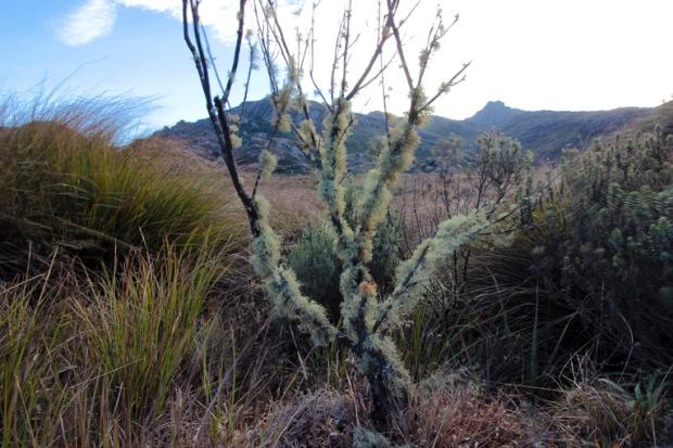 vegetacao-serrado-parque-nacional-itatiaia-a-bussola-quebrada