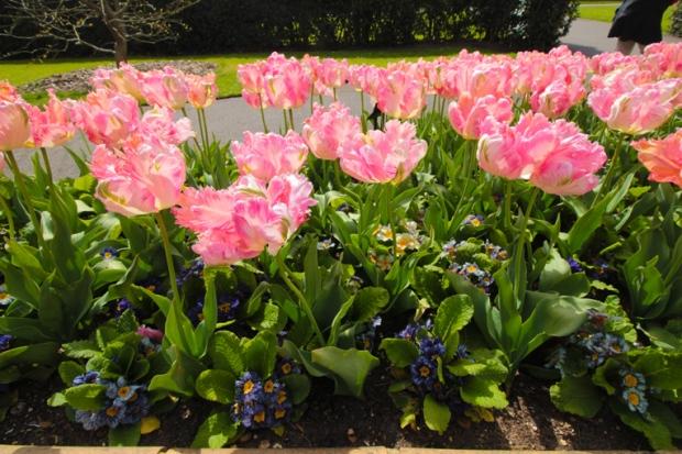canteiro-flores-kew-gardens-a-bussola-quebrada
