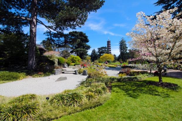 jardim-japones-cerejeiras-kew-gardens-a-bussola-quebrada