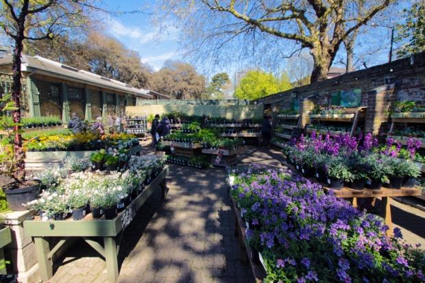 venda-flores-sementes-kew-gardens-a-bussola-quebrada