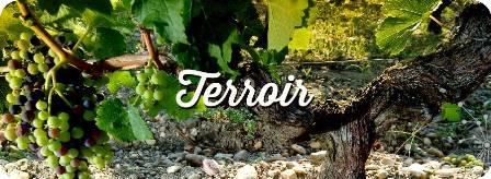 degustacao-de-vinhos-terroir