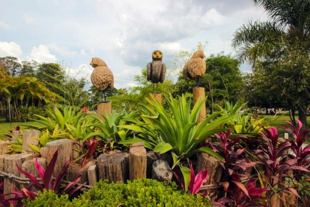 corujas-parque-ecologico-tiete-a-bussola-quebrada