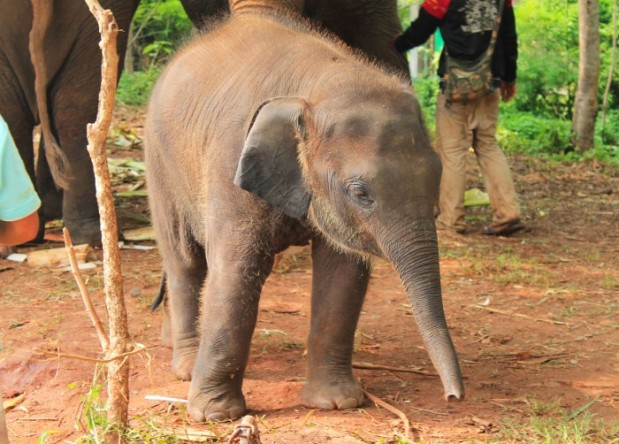 elefantinho-voluntourism-a-bussola-quebrada