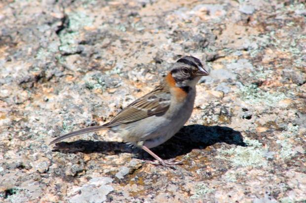 angry-bird-pedra-grande-atibaia-a-bussola-quebrada