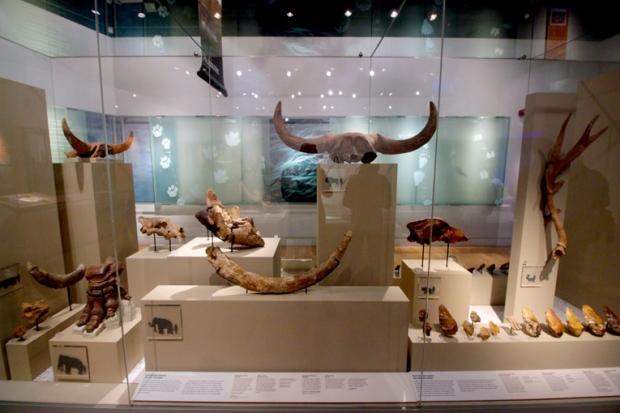 museu-de-londres-animais-chifres-a-bussola-quebrada