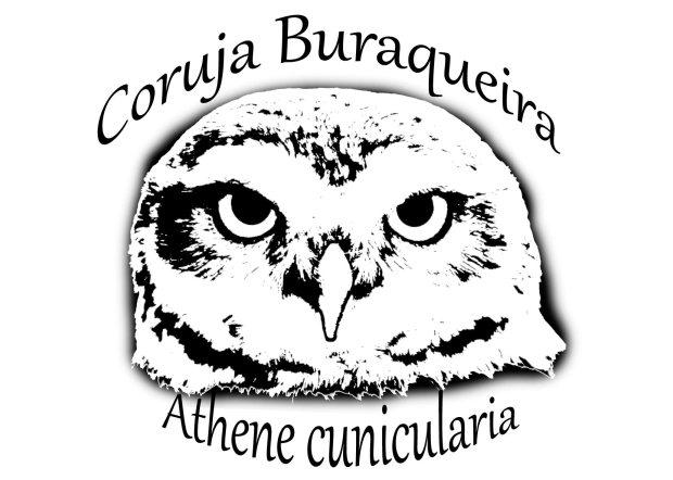 Coruja Buraqueira - Athene cunicularia.