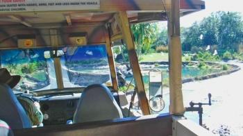 Uma cena feita dentro do carro do Safari. Segurança em primeiro lugar.