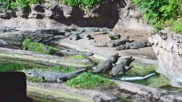 Crocodilos, leões, antílopes, gnus. dezenas de espécies no Animal Kingdom.