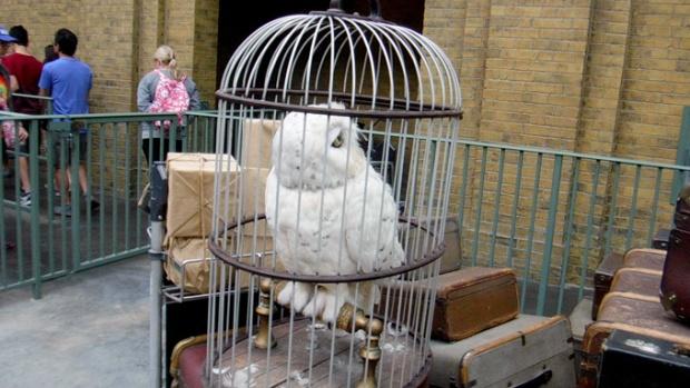 A coruja branca da Harry Potter, esperando trem para Hogwarts.