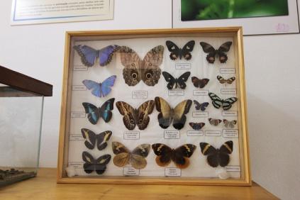 As coleções de insetos incluem lindas borboletas.