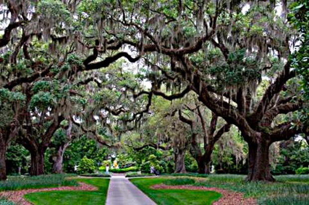 Corredor de Carvalhos em Boone Hall Plantation & Garden – Créditos Divulgação Travel South USA