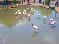 Flamingos rosados tomando sol.