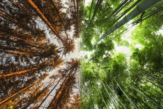 O mesmo ponto de vista, de baixo para cima. Mas as florestas são na Noruega e outra no Japão.
