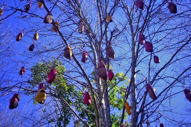 A árvore de tamancos holandeses.
