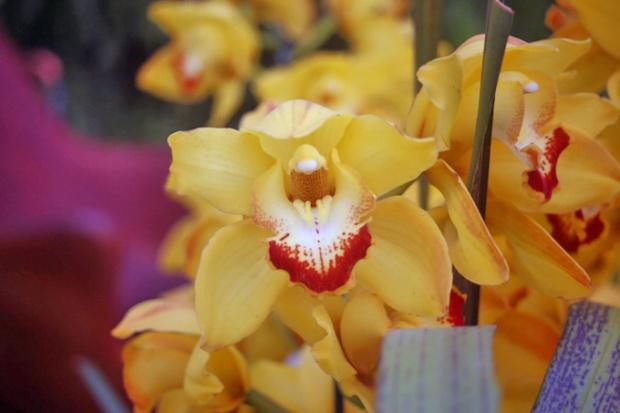 A variedade de flores na Expoflora é infinita.