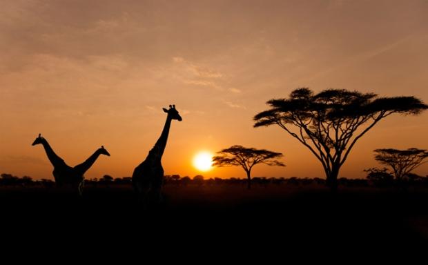 Hartbeespoort, África do Sul. Foto feita no Serengeti National Park.
