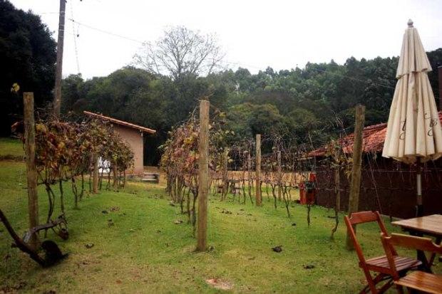 Parreiras da Terra do Vinho. Na primavera você verá estas árvores cheias de frutos e folhas.