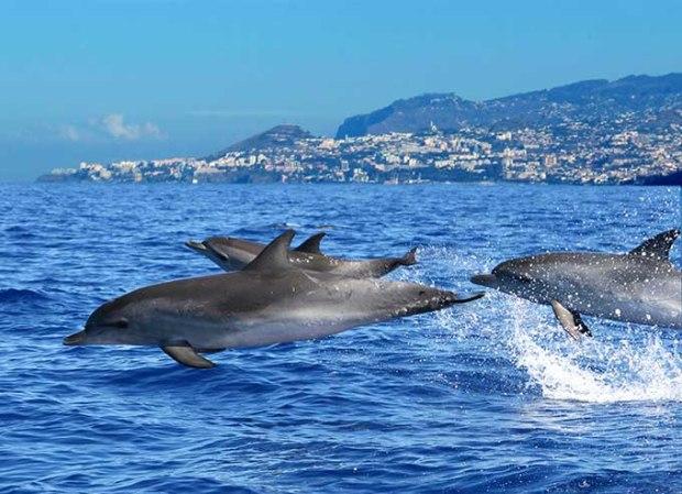 Venha ver os golfinhos de perto.